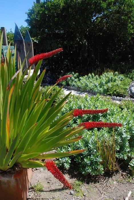 Rebeccas-Garden-8-e1353096874899