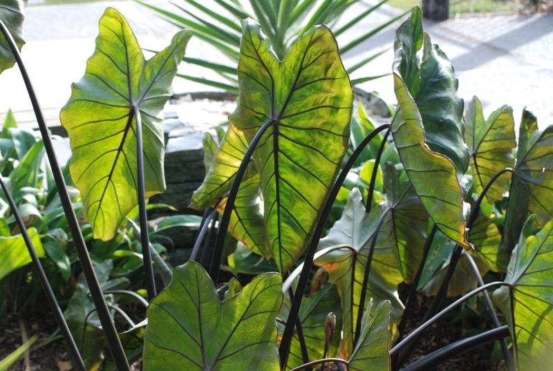 Waikanae-Tropics-39