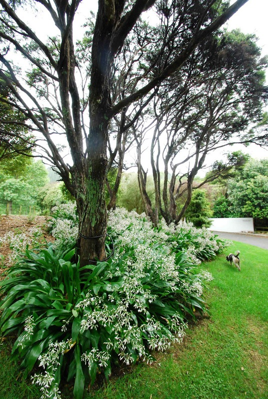 Waikanae-Woodland-Drive-1