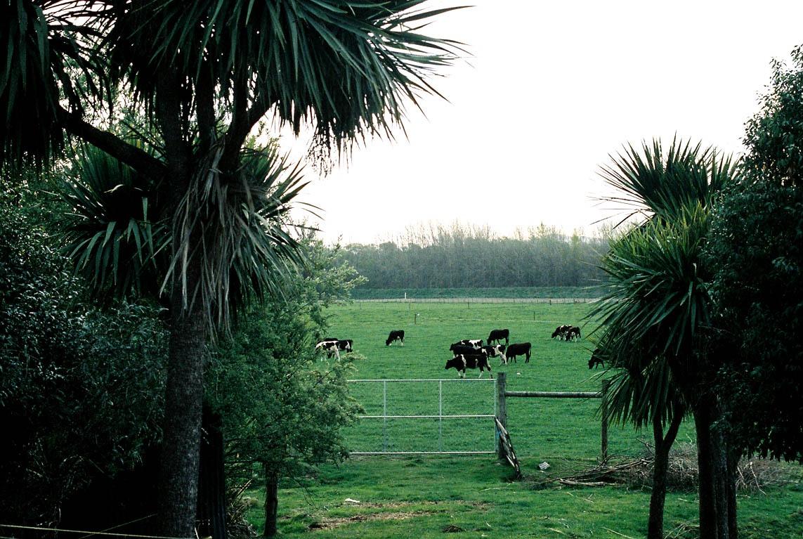 Waikuku-Rural-