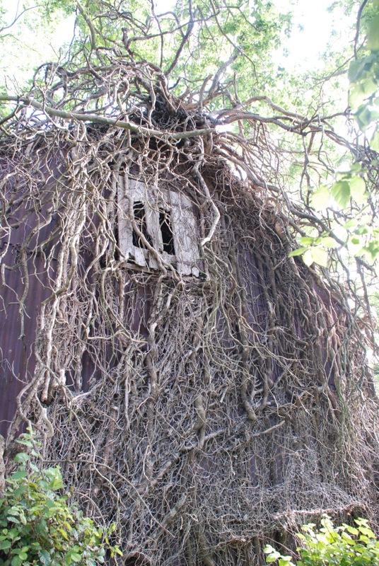 Waikuku-Woodland-Garden-6