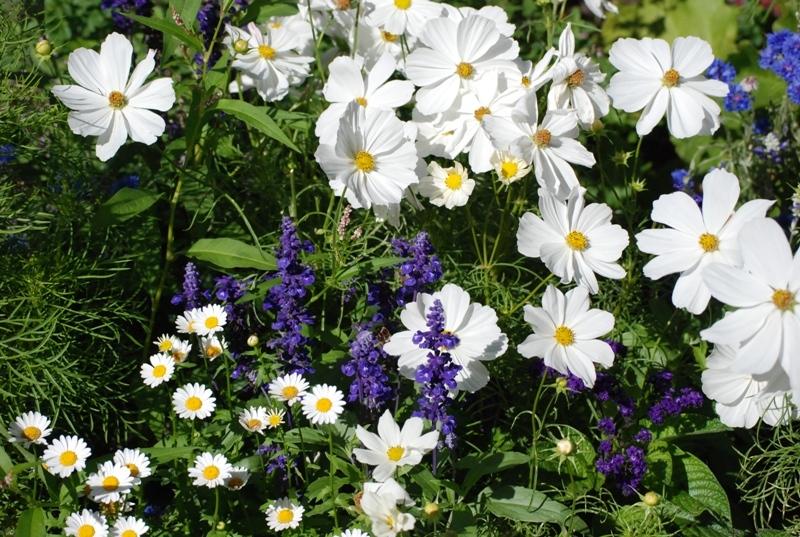 LennoxMarwick-Garden-051